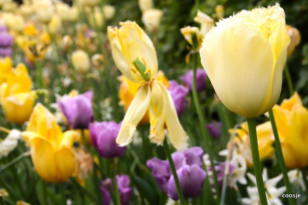 paars gele bloemen