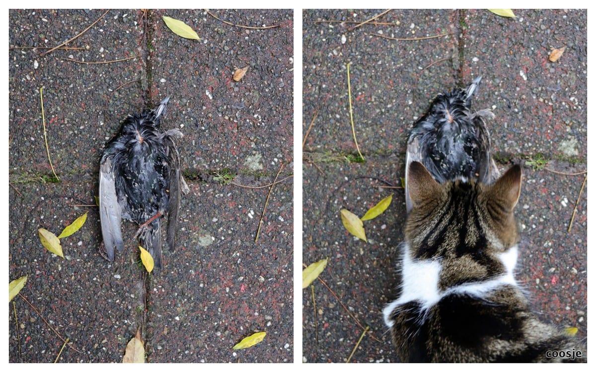 vogeljacht