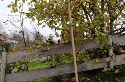 herfst tuin