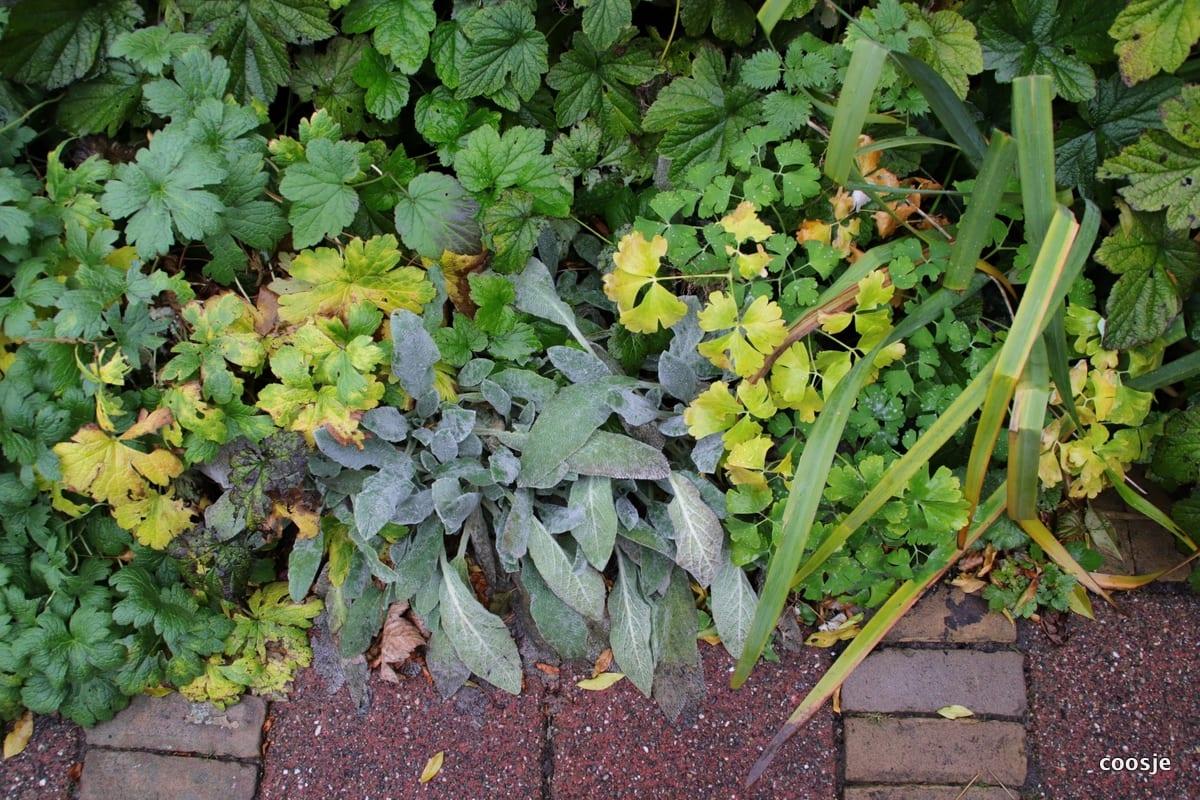 Winterklaar Maken Tuin : Je tuin winterklaar maken doe het met deze eenvoudige tips