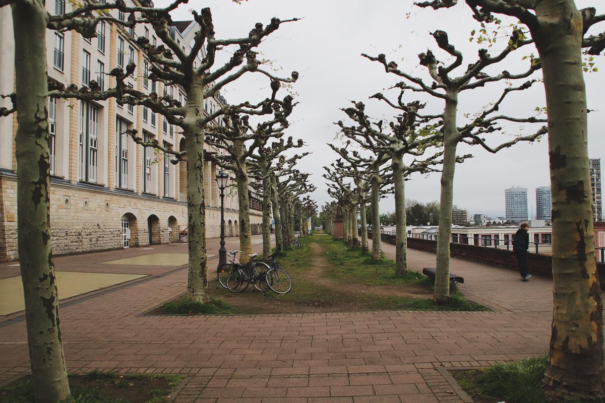 travel Mainz